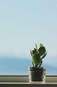 A small desk plant by a window.